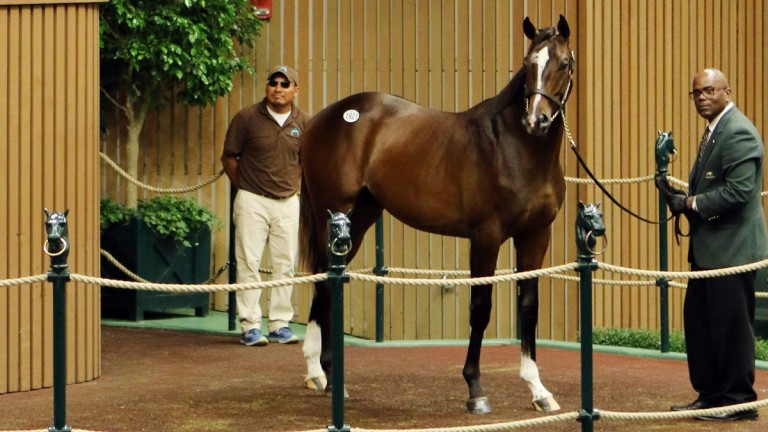 This son of Verrazano topped the session at $625,000