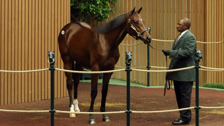 The $500,000 Will Take Charge colt