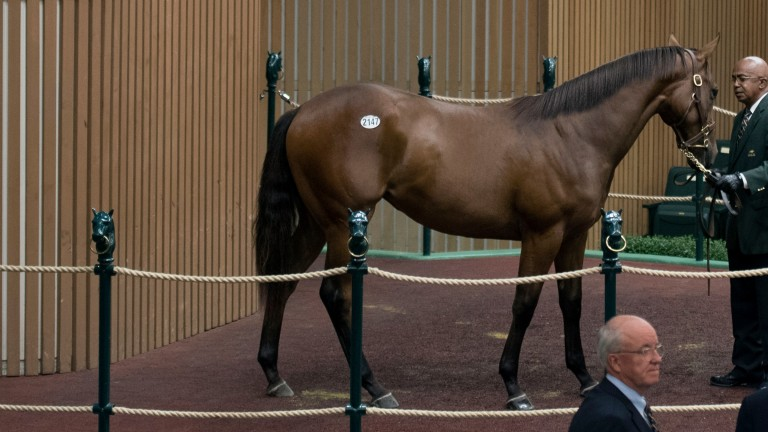 At $285,000 this Orb filly made the second highest price on the opening day of Book 4