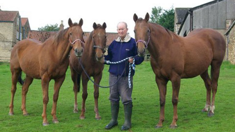 David Brotherton with Bishops Court (left), Indigo (middle) and Amused (right)