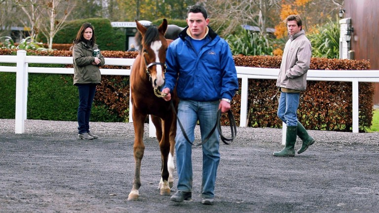 Gerry Burke (right) and Patricia Burke inspect the George Washington filly before buying her as a foal at Goffs