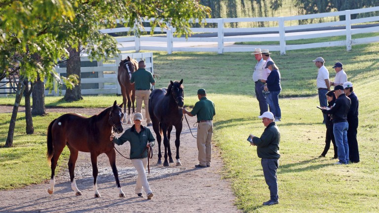The Keeneland September Yearling Sale finishes on Saturday