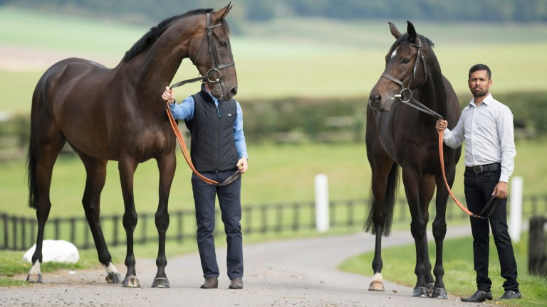Altior (right) and his groom Mohammed Hussain pose with Might Bite (Dave Fehily) at Nicky Henderson's owners day at Seven BarrowsLambourn 24.9.17 Pic: Edward Whitaker