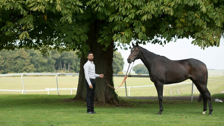 Altior and his groom Mohammed Hussain pose at Nicky Henderson's owners day at Seven BarrowsLambourn 24.9.17 Pic: Edward Whitaker