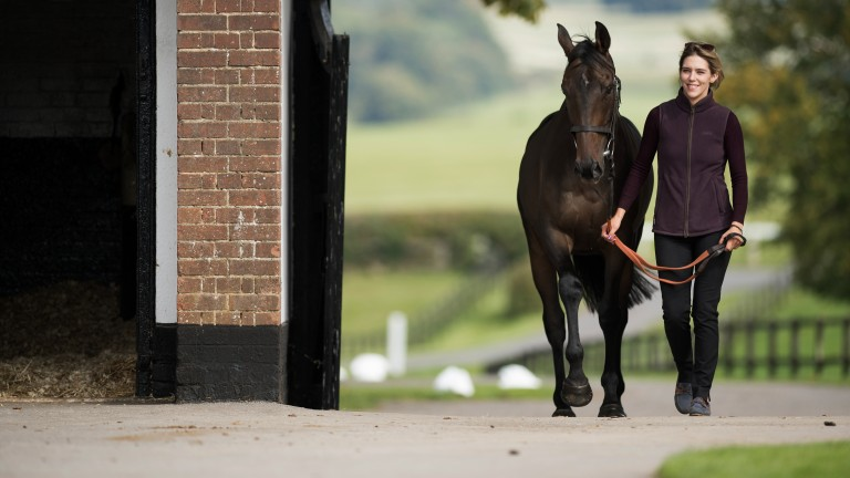 Speed star: Champion Hurdle winner Buveur D'Air is on parade at Seven Barrows