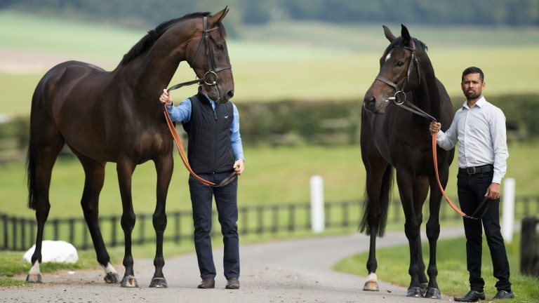 Altior (right, pictured with stablemate Might Bite) was recently found to have a wind problem