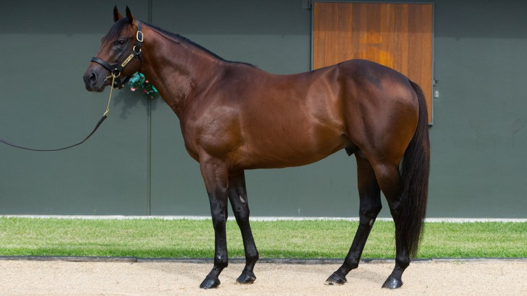 Spill The Beans: the first son of the all conquering Snitzel to stand in Europe