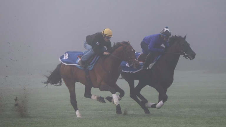 Satono Diamond and Christophe Lemaire (yellow cap) gallop on Les Aigles in Chantilly on Wednesday morning
