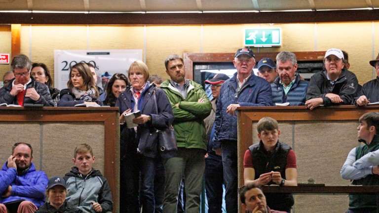Justin Casse (green) contemplating his next bid during the €1.6 million Frankel colt's time in the Goffs ring