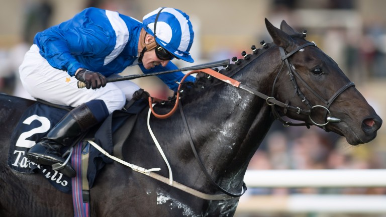 Elarqam: 1.6 million guineas purchase stormed to success in the Tattersalls Stakes on Thursday
