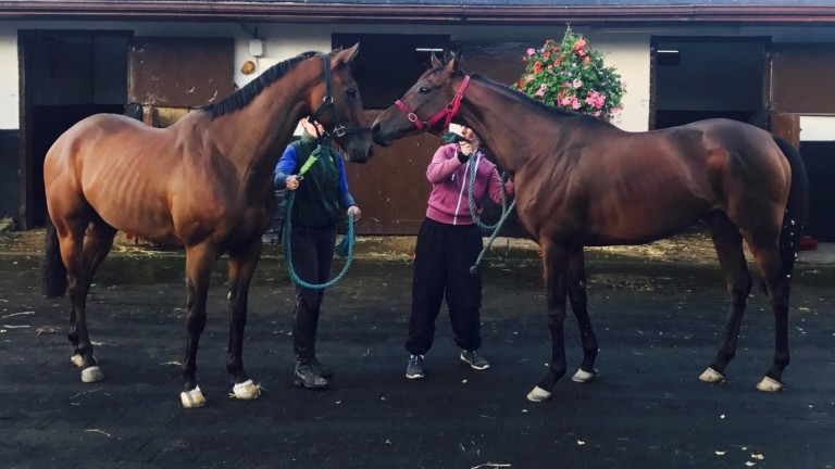Airlie Beach (right) bids farewell to her son Accidental after bowing out of her racing career with a Listed victory at Galway
