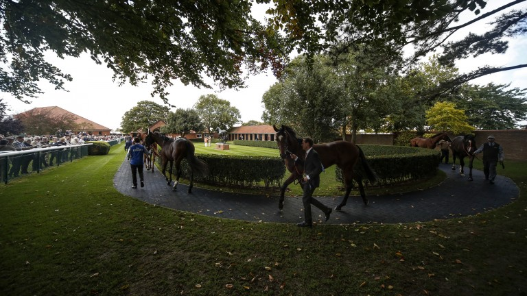 It must be autumn: fallen leaves dot the paddock-side turf as runners stretch their legs in the pre-parade