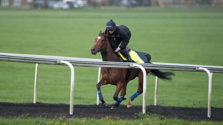 Enable powers up Warren Hill during her final piece of work before the Arc