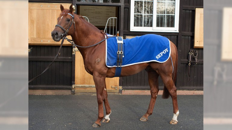 Sepoy did not return to Dalham Hall this year