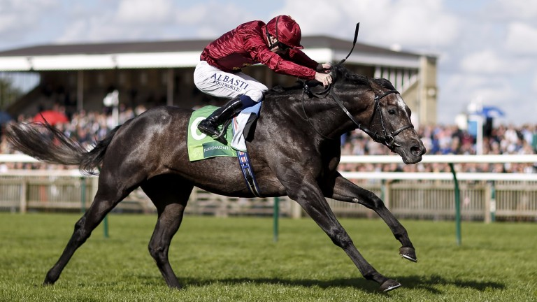 Roaring Lion: the Royal Lodge winner may be heading to the Breeders' Cup