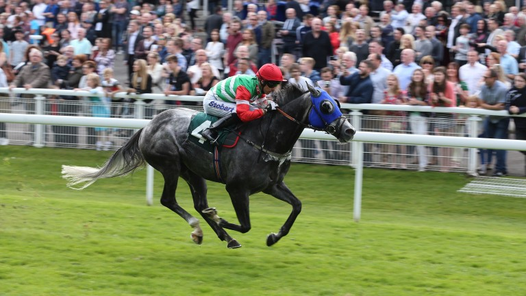 Dark Emerald: gelding won eight of his 50 appearances