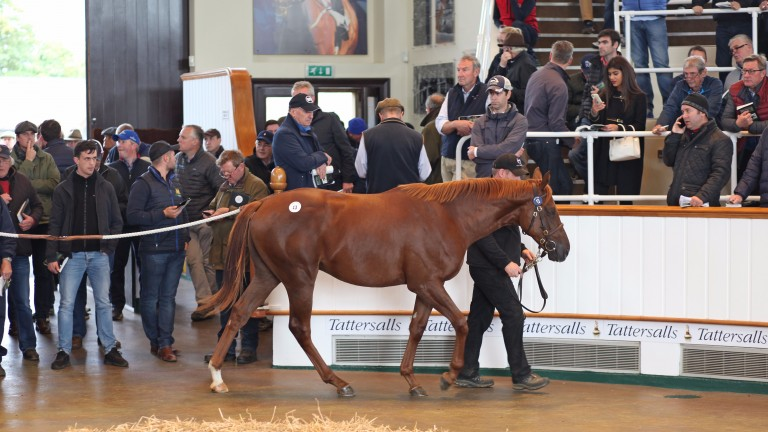 Lot 13: the Dubawi colt out of Pretty Polly Stakes winner Izzi Top that fetched 2,600,000gns from Roger Varian
