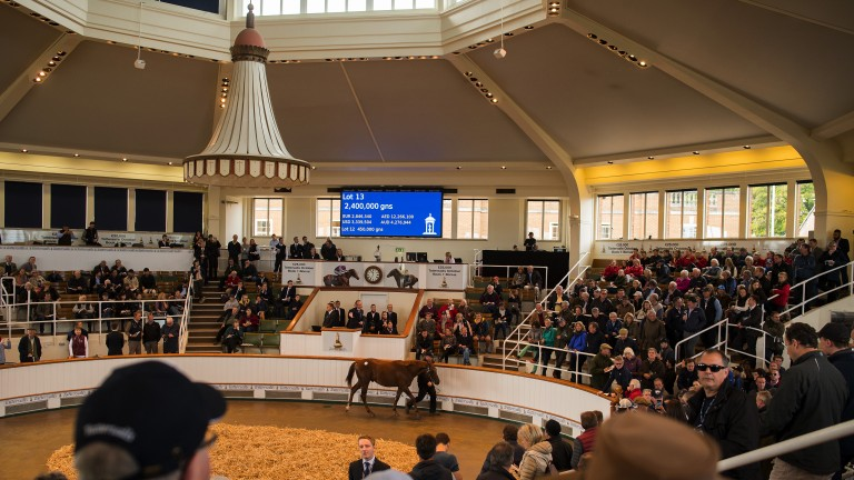 This Dubawi colt out of Izzi Top fetched 2.6 million guineas at Book 1 last year