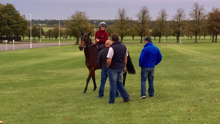 Revived will head to the Listed Bosra Sham Stakes at Nemarket next month