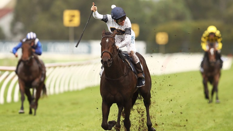 She Will Reign is out of the Charge Forward mare Courgette