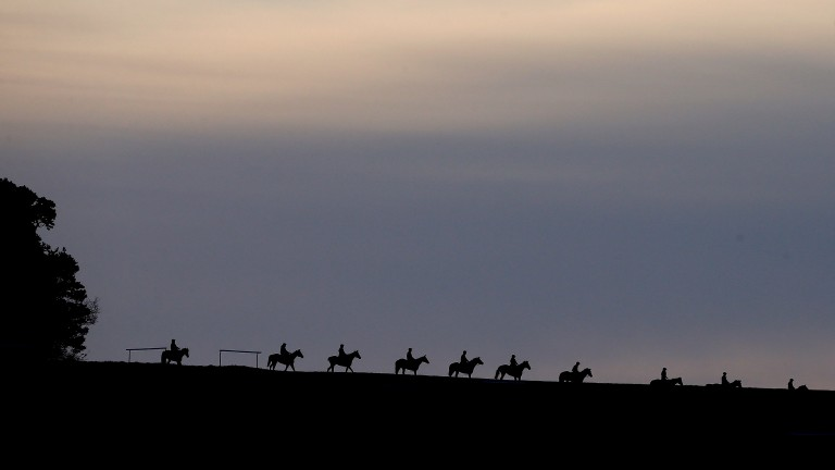 On the gallops: different types of horse need different work regimes