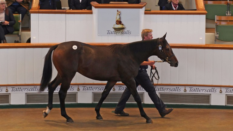 The Dubawi colt out of Sky Lantern is one horse to follow in 2018 from our panel