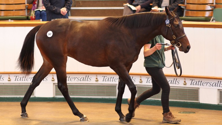 Lot 247: the Japan-bound Frankel filly bought by DMM.com for 1,400,000gns