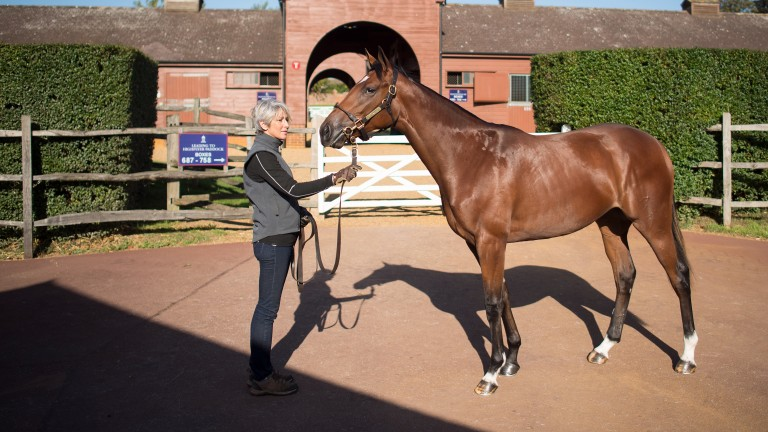 Gloam being shown by her groom Rachel Andre at Tattersalls on Tuesday