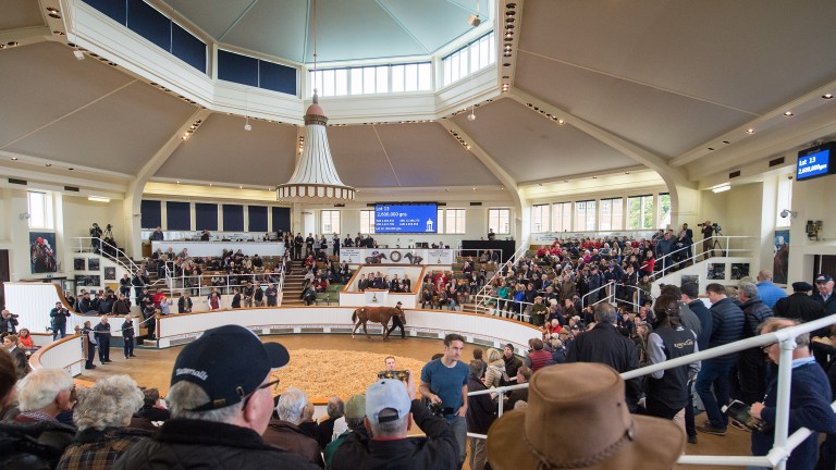 The Tattersalls sales ring, where Godolphin purchased the top lot at this week's Book 1 of the October Yearling Sale for 4,000,000gns
