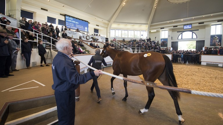 Gloam, a daughter of champion sire Galileo and dual Grade 1 winner Dank, sold for 4,000,000gns at Tattersalls after Sheikh Mohammed's Godolphin operation outbid Coolmore, a duel harking back to the bloodstock scene of old
