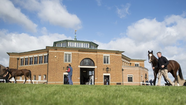 The Tattersalls October Yearling Sale continues this week