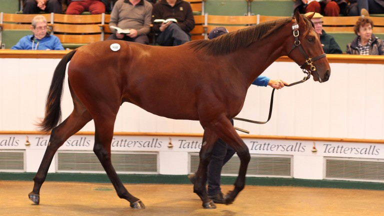 This son of Australia went the way of John and Jake Warren for 380,000gns