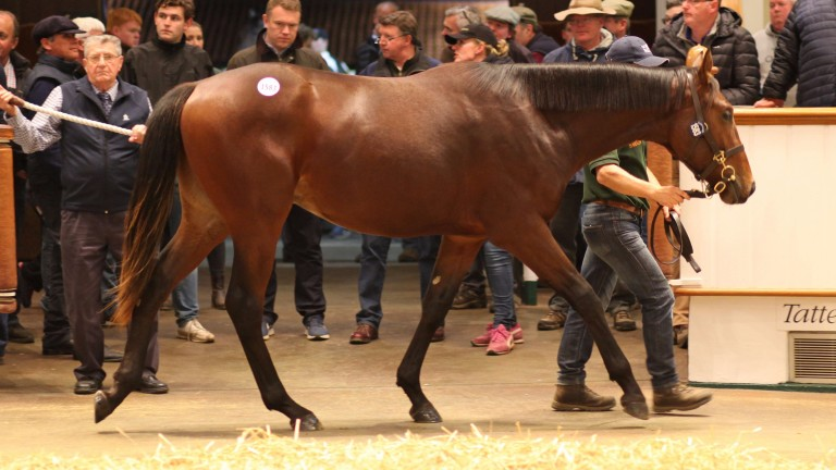 The Sea The Moon colt who was pinhooked by Corps Commerce for 25,000gns as a foal and sold yesterday for 80,000gns