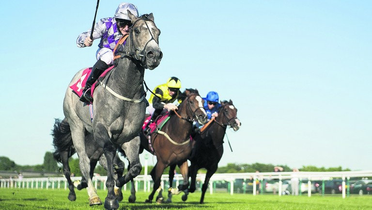 Group 3 and Listed winner Havana Grey has been one of the stalwarts for Karl Burke this season