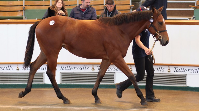Lot 1732: Farhh filly offered by Barton Stud became first six-figure yearling at this year's Book 3
