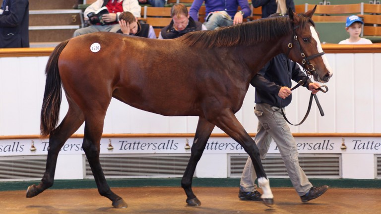 Lot 1930: Garswood colt one of seven yearlings to realise 25,000gns or more during the closing session of Book 3