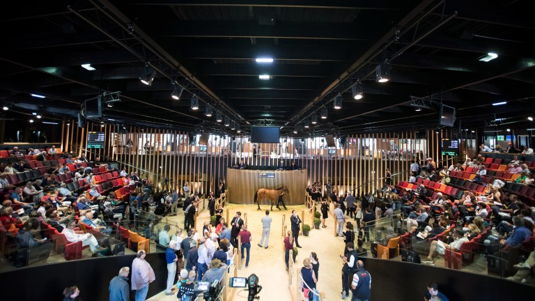The Arqana Summer Sale takes place on Wednesday, July 4