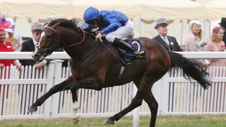 Atty Persse: holds decent claims on return to Ascot