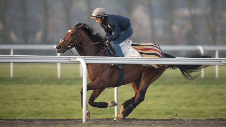 Frankel and Shane Fetherstonhaugh exercise up Warren Hill