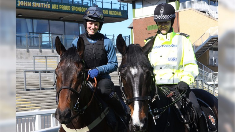 Big Fella Thanks and Merseyside Police horse Jaguar - who's the smartest?