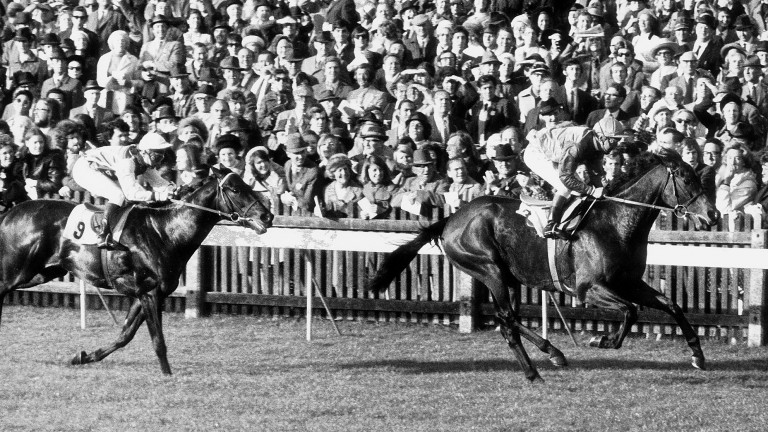 Brigadier Gerard: more than just a great racehorse