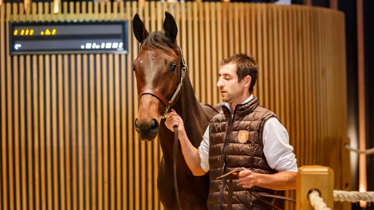 The Frankel colt out of Pearly Shells bought for €250,000