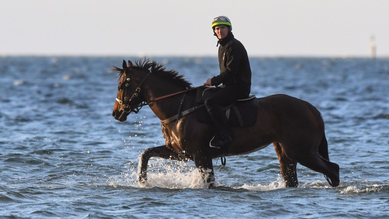 Ben Cadden rides Winx walks through the shallow waters of Altona Beach, Melbourne