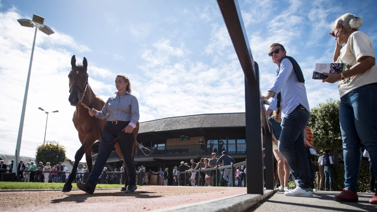 Arqana's Summer Sale has a mixed catalogue on offer over two days of trade