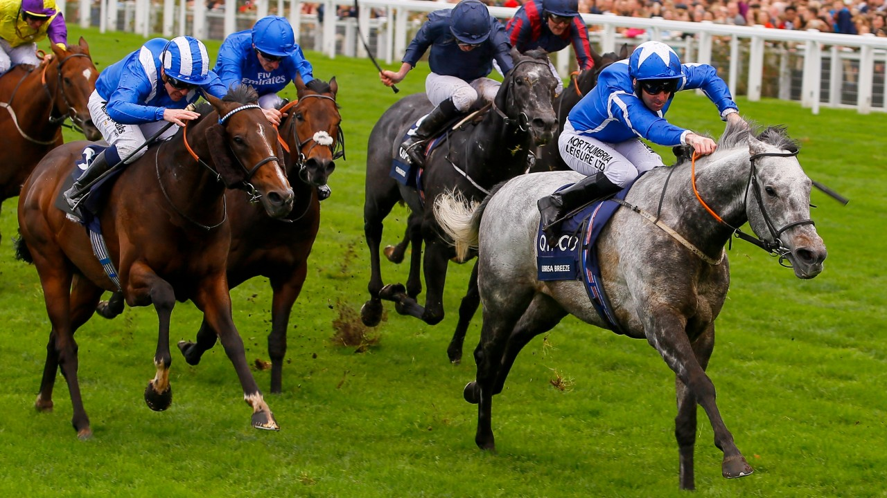 ivory has high hopes librisa breeze can blow hot in al