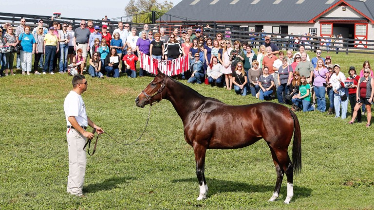 Songbird: the dual champion filly poses for the crowd at Taylor Made Farm in Kentucky