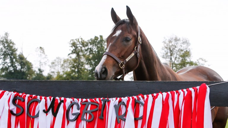 Songbird: the nine-time Grade 1 winner examines a banner bearing the Foxhill Farm racing colours
