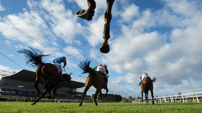 Kempton: two matches and a three-runner race on Monday's card