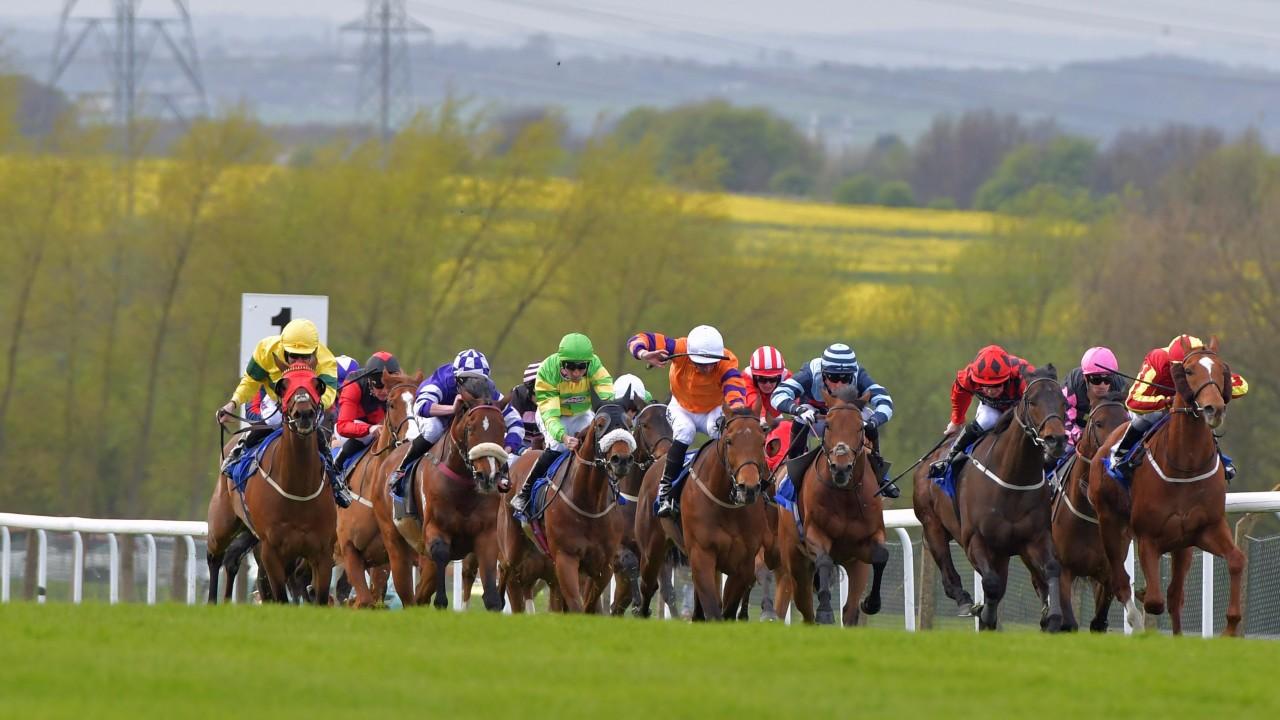 Gg tips horse racing - Blue ridge lodge blue ridge ga