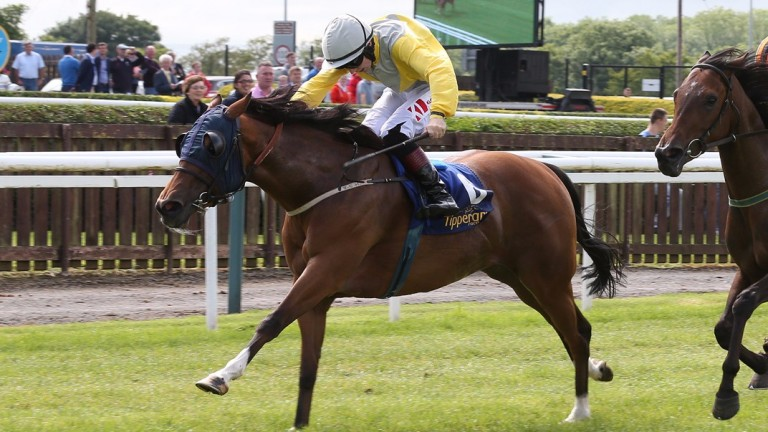 TIPPERARY SAT 9 JULY 2016  PICTURE: CAROLINE NORRIS     SARAH ASH CALUM RIDDEN BY GARY CARROLL, ORANGE AND BLACK, GETTING UP TO BEAT ACCALIA AND COLIN KEANE IN THE CLOSING STAGES OF THE DOWNLOAD THE AWARD WINNING AT THE RACES APP MAIDEN